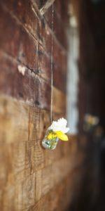 Flower Jar Far North Queensland Photography