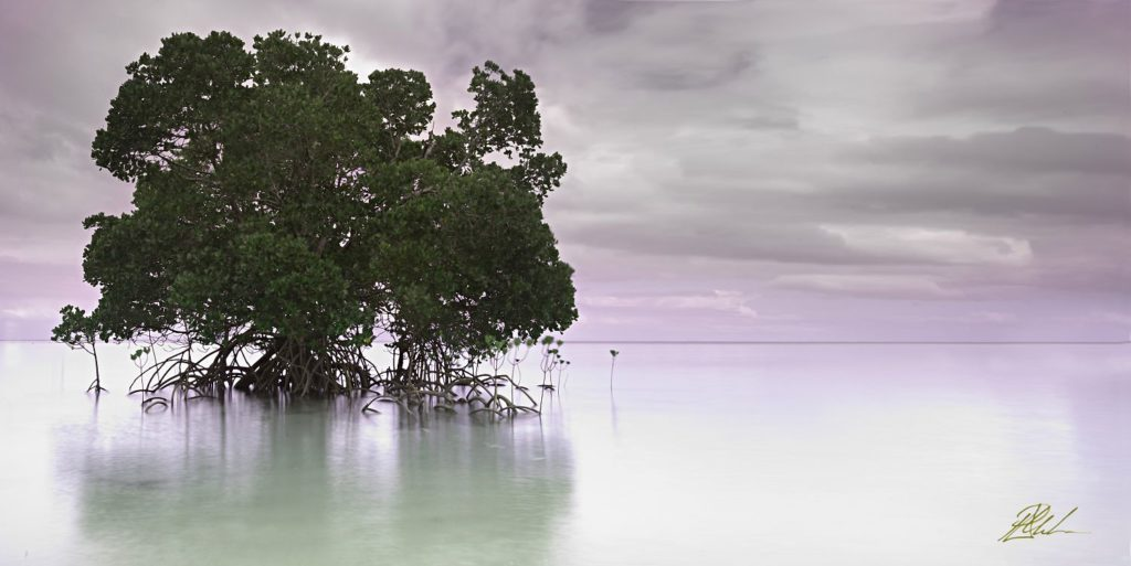 Lone Mangrove Perrin Clarke Landscape Photography