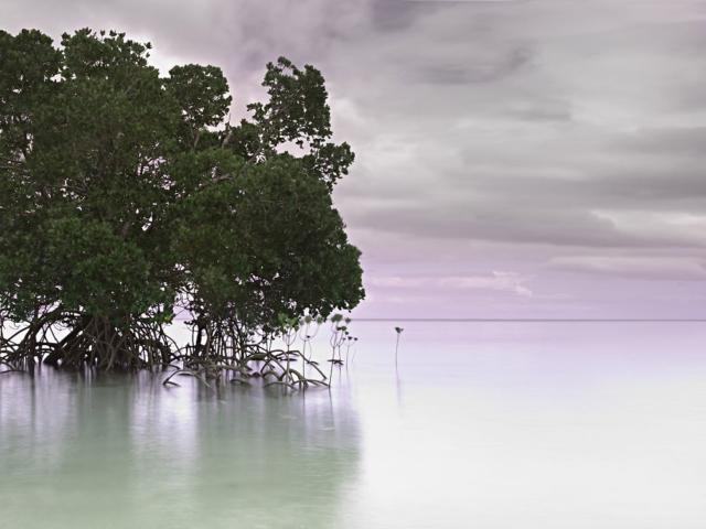 Lone Mangrove Perrin Clarke Landscape Photography
