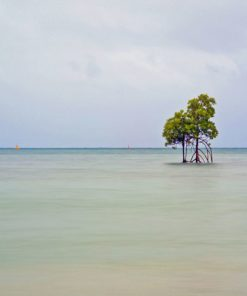 Orpheous Island Mangrove Fine Art Photography