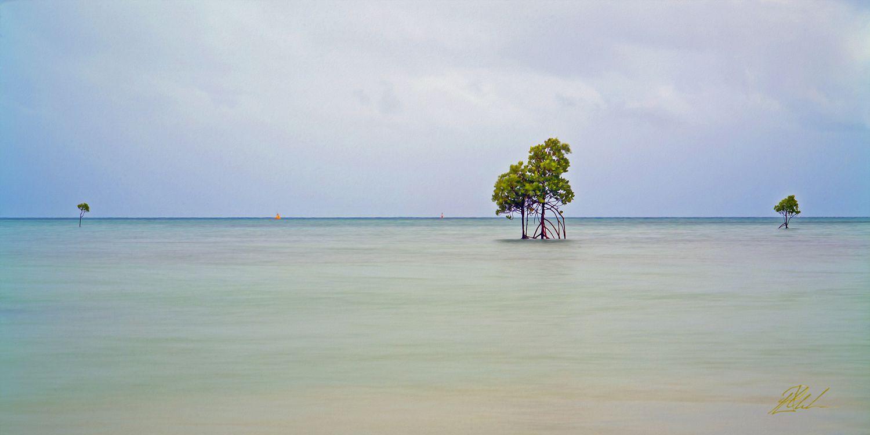 Orpheous Island Mangrove Fine Art Photography