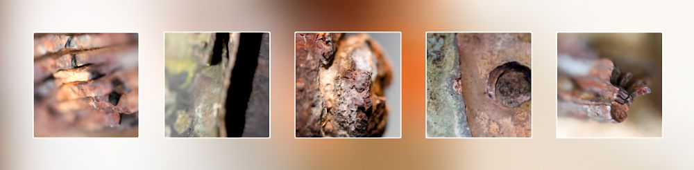 Rust Macro Far North Queensland Photography