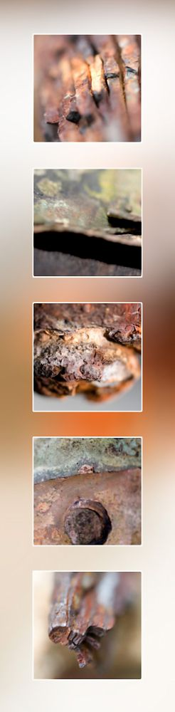 Rust Portrait Macro Photography Port Douglas Photography