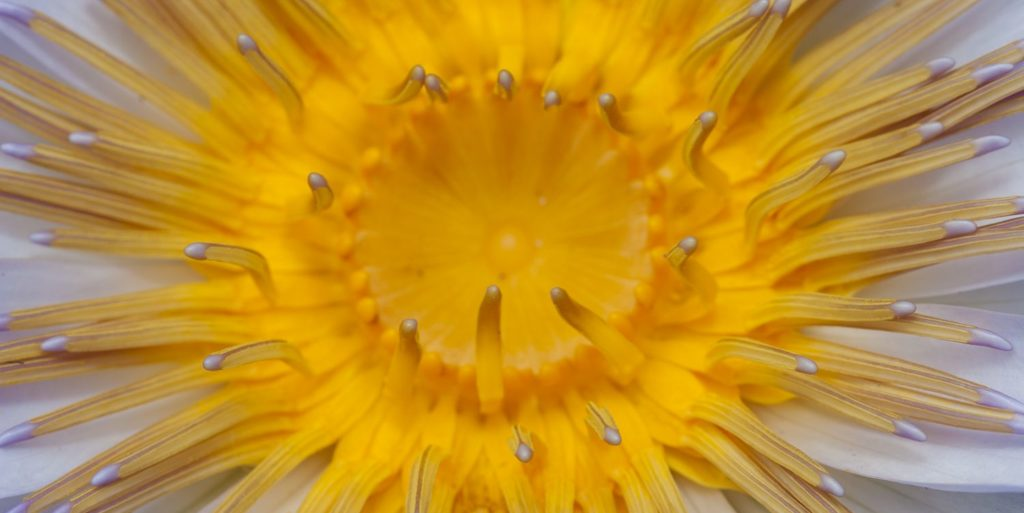 Sunburst Perrin Clarke Photography