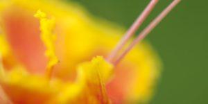 Tropical Flower Drama Port Douglas Photography
