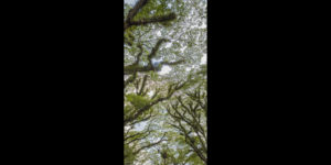Mossman Raintrees Far North Queensland