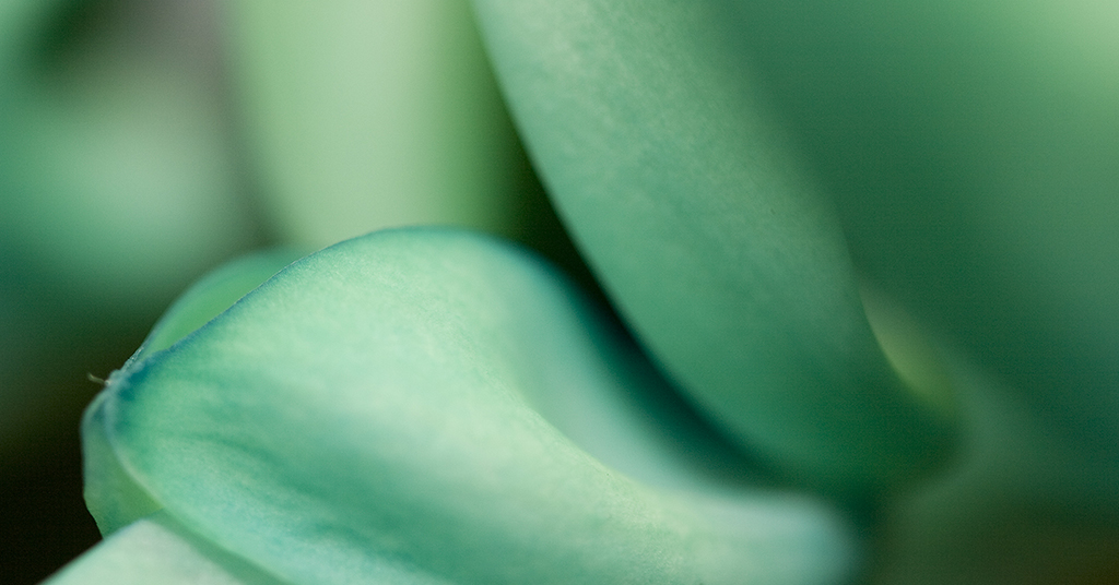 floral macro photography